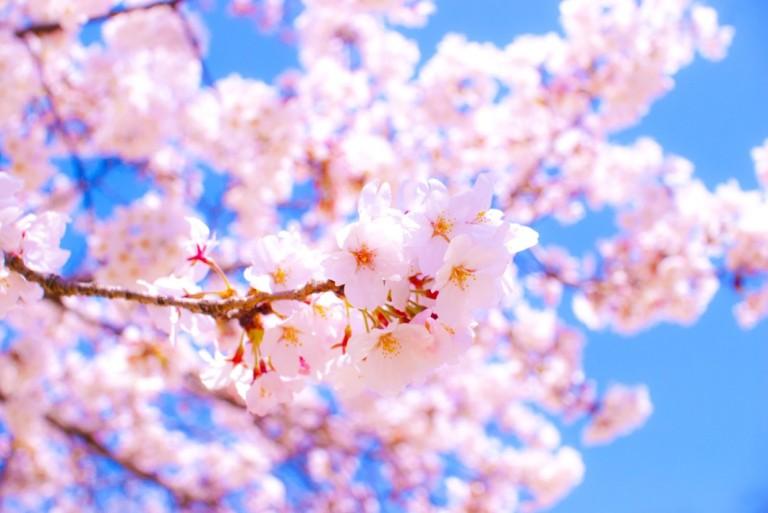 春日の花見スポットをご紹介!